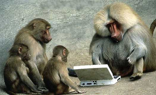 Monkeys at Keyboards