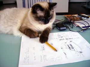 Cat calculations